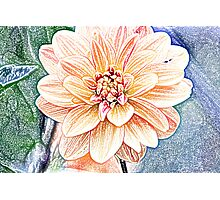Flower sketch Photographic Print