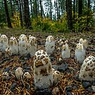 Wild about Mushrooms by Charles & Patricia   Harkins ~ Picture Oregon