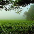 Misty Morning by Susan Blevins