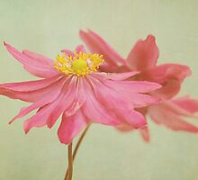 valse florale by Iris Lehnhardt