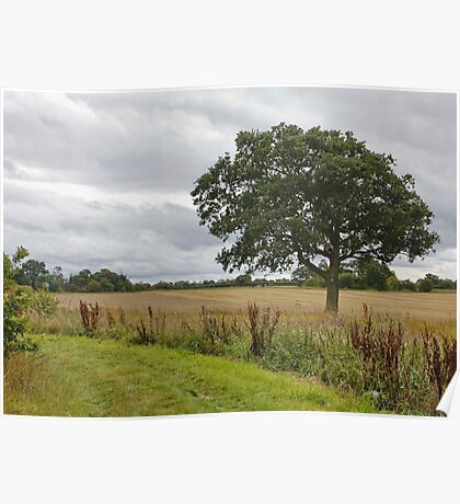 Cheshire Countryside, Poster