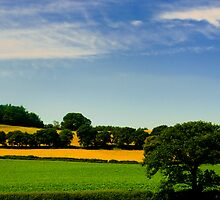 Staffordshire Shropshire Border by David J Knight