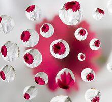 Pink Gerbera Bubbles by Lin-Ann Anantharachagan
