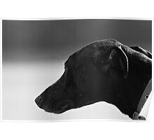 Reservoir Dog Poster
