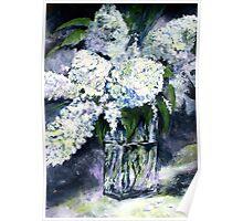 White Hydrangeas in Crystal Vase Poster