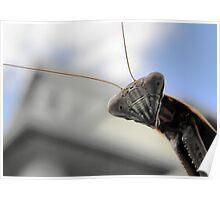 """Chinese Praying Mantis Tenodera sinensis says """"Hello"""" Poster"""