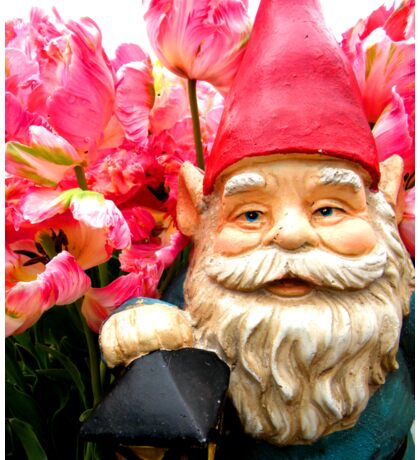 Tulip of Pink Gnome III Sticker