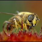 Little bee... by jean-jean
