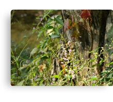 Shouting Stump Borders Thicket Canvas Print