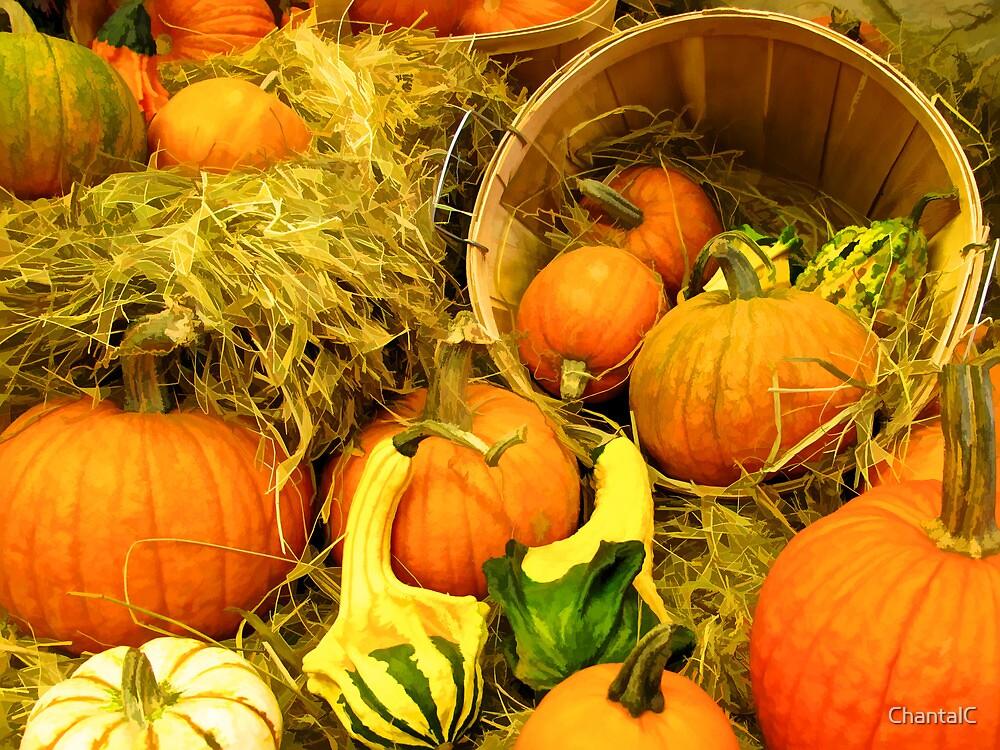 Fall Autumn Harvest - Pumpkins, Gourds & Squash in Wooden Bushels & Baskets by Chantal PhotoPix
