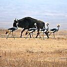 Crowned Crane and Wildebeest. by Sheila Smith