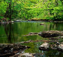 River Teign, Dartmoor, England by Craig Joiner