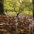 Autumn shoots by Esther  Moliné