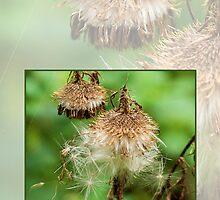 Wishflies by webetilin