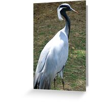 Demioselle Crane Greeting Card