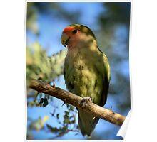 Pretty Bird Poster