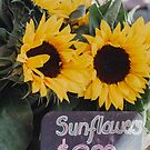 Sunflower Bouquet by Bethany Helzer