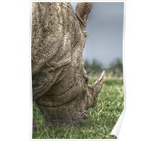 Rhino Hdr  Poster
