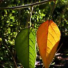 Changing Seasons by Erica Yanina Lujan