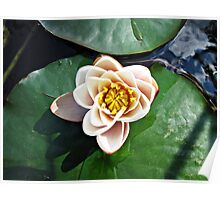 Schliersee Lily Pad. Poster
