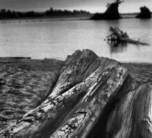 Driftwood At Siletz Bay Sticker