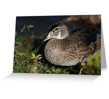 Female Wood Duck Greeting Card