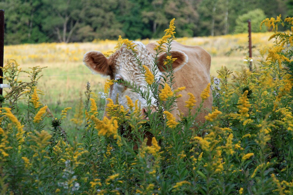 The Golden Cow In The Golden Pasture by Geno Rugh