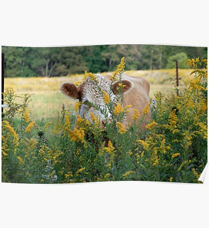 The Golden Cow In The Golden Pasture Poster