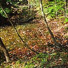 Falling Leaves in Forest Pond by teresa731