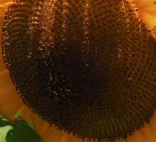 Sunflower - Helianthus Sticker