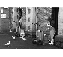 Seagulls at the back door Photographic Print
