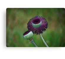Velvety Capped Poppies Canvas Print