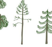 Pine Trees in Sweden Sticker