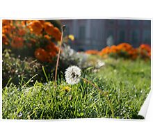 Lonely dandelion Poster