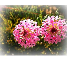 Pink Wildflowers - Dunsborough, WA Photographic Print