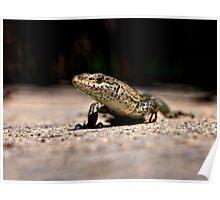 Lizard Poster