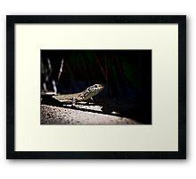 Lizard 2 Framed Print