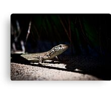 Lizard 2 Canvas Print