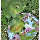 Narcissus the Frog by Donna Keevers Driver