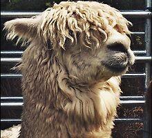 Monday Llama by Printzlife