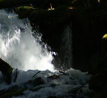 Big Creek Falls, Washington by Loisb