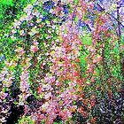 Weeping Cherry by Holly Martinson