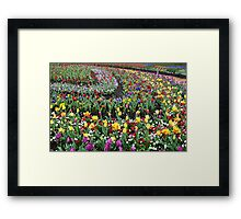 Colourful Curved Tulip beds Framed Print