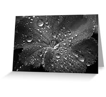 Droplets on leaf b&w Greeting Card