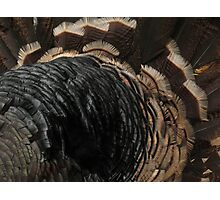 Turkey feathers Photographic Print