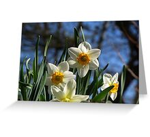 Narcissus 'Geranium' Greeting Card