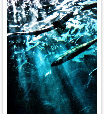 Shark Tank Sticker