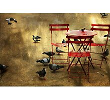 Festin de pigeons Photographic Print