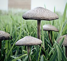 Mushrooms x5 by Jason Charlton