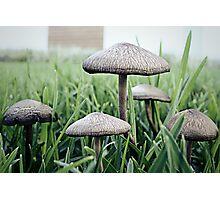 Mushrooms x5 Photographic Print